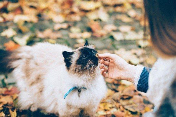 Kedi Maması (Konserve, Ödül, Açık, Kuru) Seçimi Yaparken Dikkat Etmeniz Gereken 5 Önemli Madde